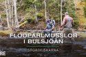 Flodpärlmusslor i Bulsjöån, Ydre - SportFiskarna